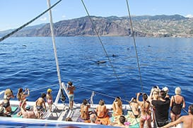 Observe the whales and dolphins in Madeira, Portugal