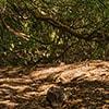 thumb 05 caldeirao verde helloguidemadeira